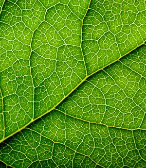 Regenerative plant-based complex