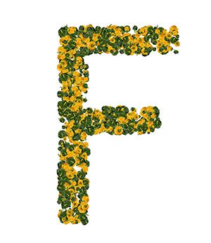Vitamine F